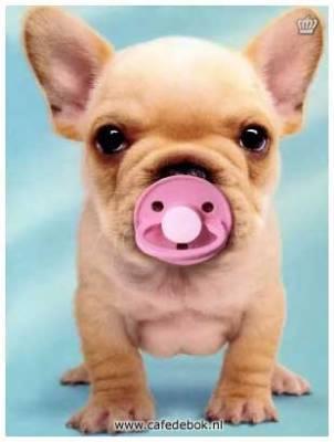 Hondenpensions